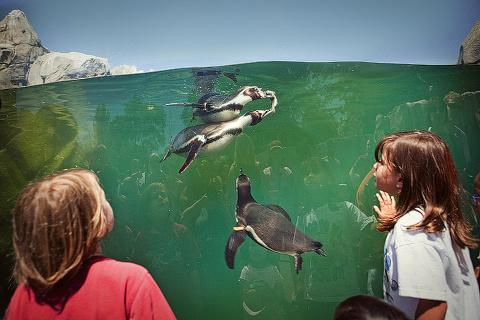 woodland_zoo_penguin